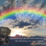 Cody Lesure Rainbow