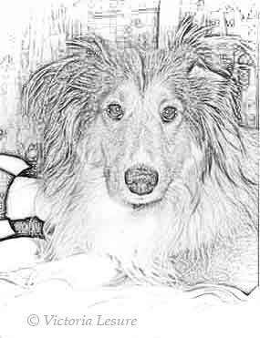 Timothy O'Christpher (Timi) Pencil Sketch