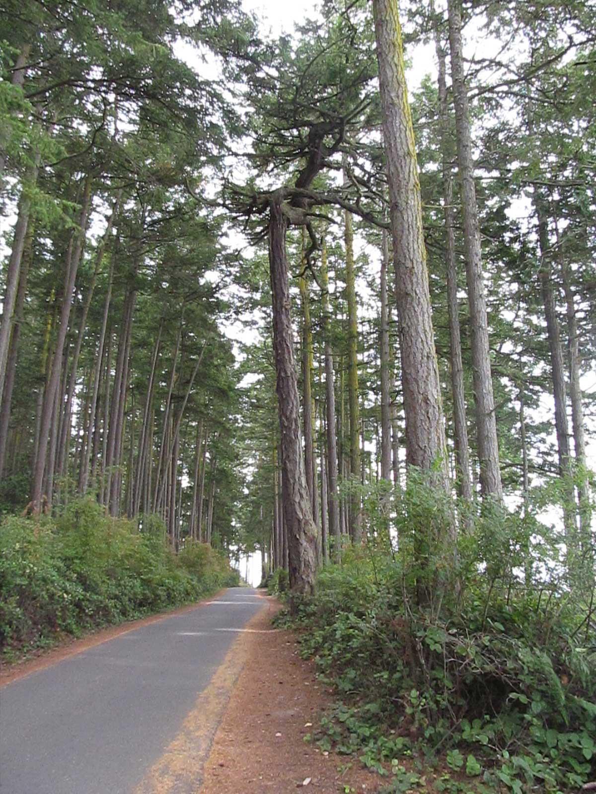 Tree Lined Road in Washington